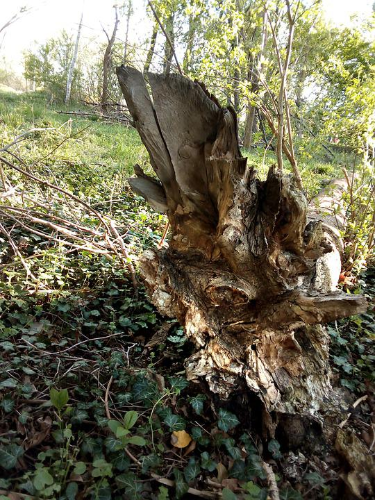 Tree, Uprooted, Nature, Wood, Broken Tree, Broken Wood