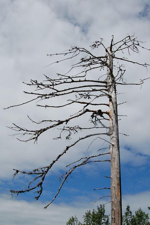 Waldsterben, Tree, Dead, Dead Plant, Wood, Gnarled, Sky