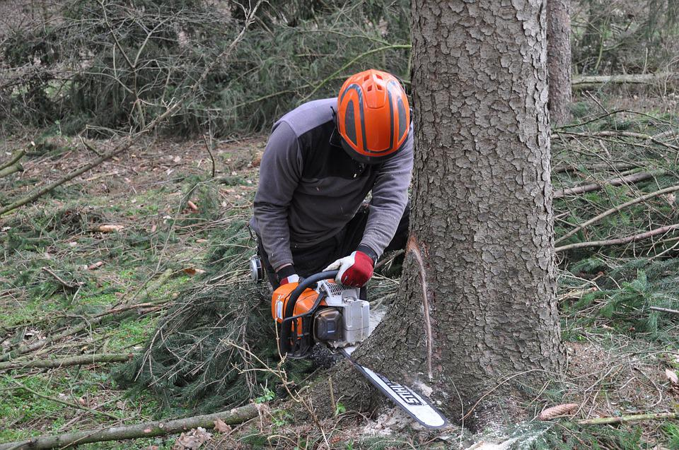 Forestry, Inventory, Forestry Work, Forest, Tree, Wood