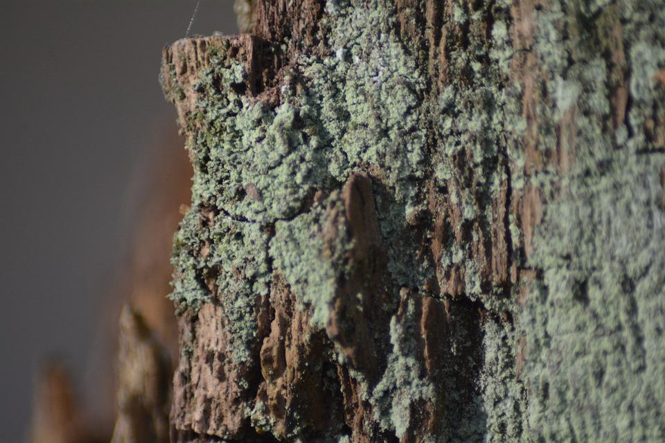 Tree, Bark, Nature, Wood