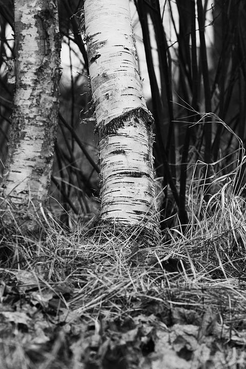 Wood, Tree, Nature, Outdoors