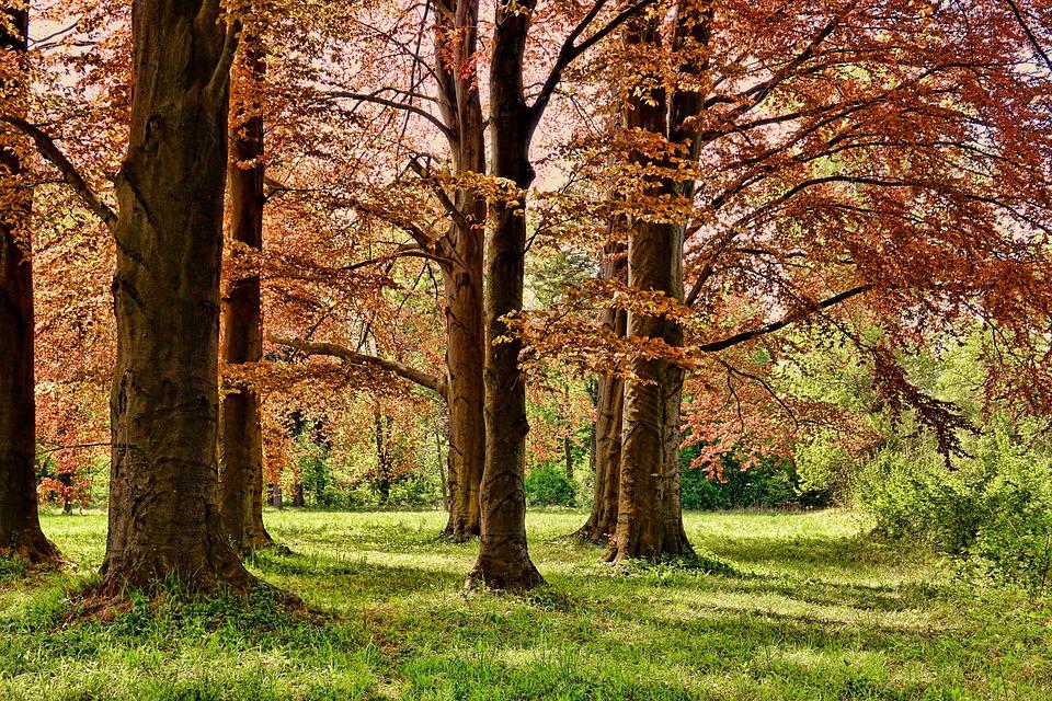 Tree, Spring, Park, Wood, Leaf