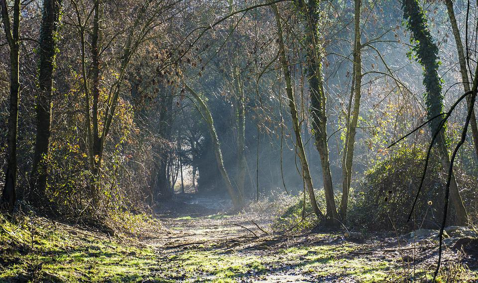 Forest, Nature, Wood, Tree, Landscape, Leaf, Trail