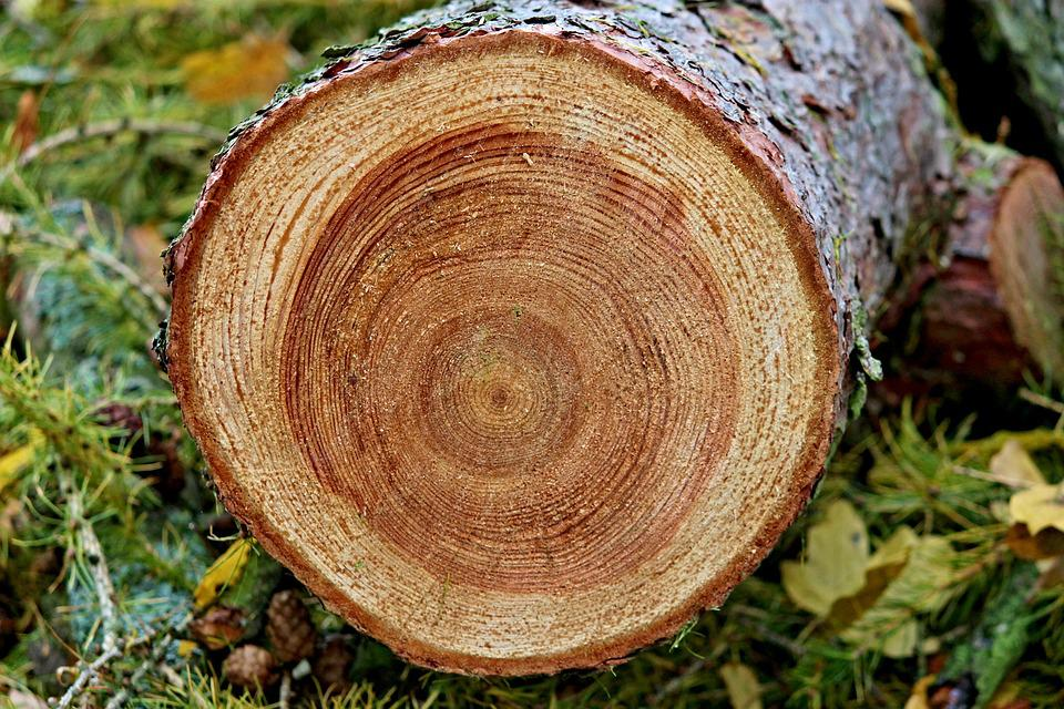 Annual Rings, Tree, Tree Grates, Wood, Tribe, Log