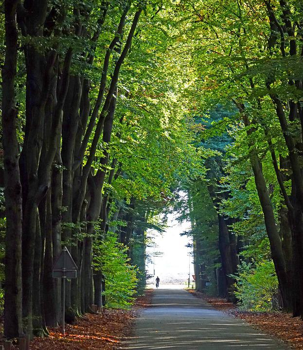 Tree-lined Street, Autumn, Fall Colors, Beech
