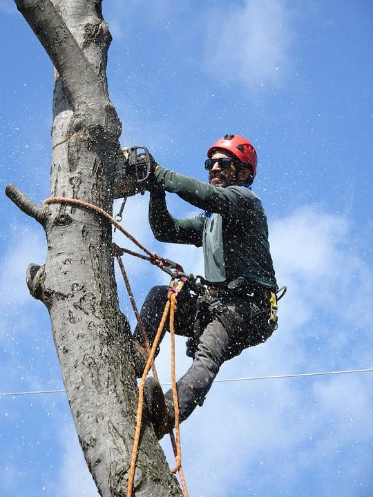 Lumberjack, Tree-service, Tree-trimming, Tree-worker