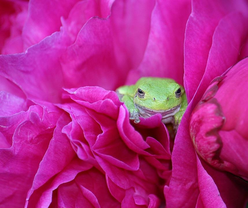 Amphibian, Animal, Green, Treefrog, Tree-frog