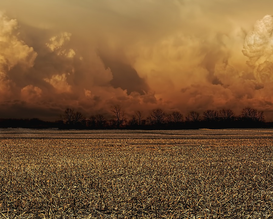 Storm, Storm Clouds, Scenery, Trees, Artistic