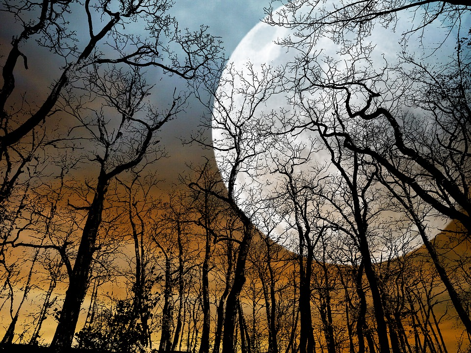 Moon, Trees, Sky, Clouds, Autumn, Full, Outdoor