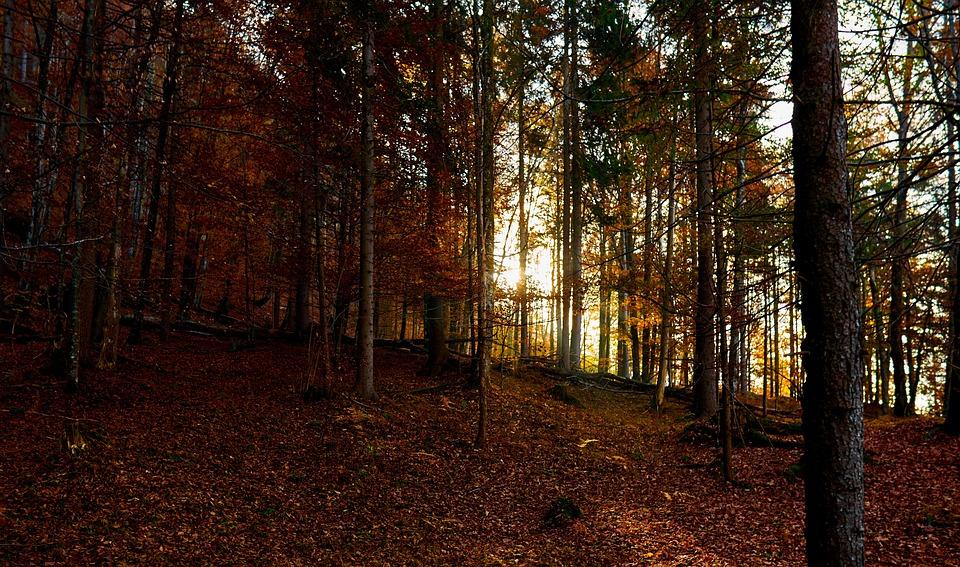 Nature, Forest, Landscape, Trees, Sunrise, Autumn