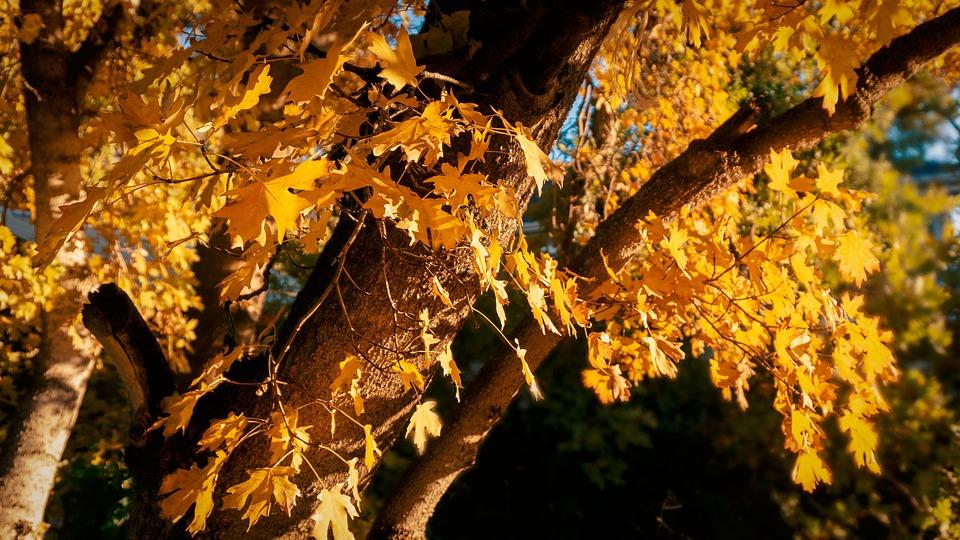 Trees, Leaves, Autumn, Fall, Orange, Nature, Mood