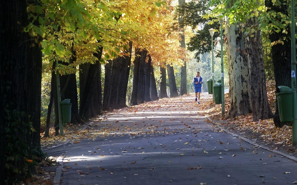 Landscape, Park, Autumn, Trees, Trunks