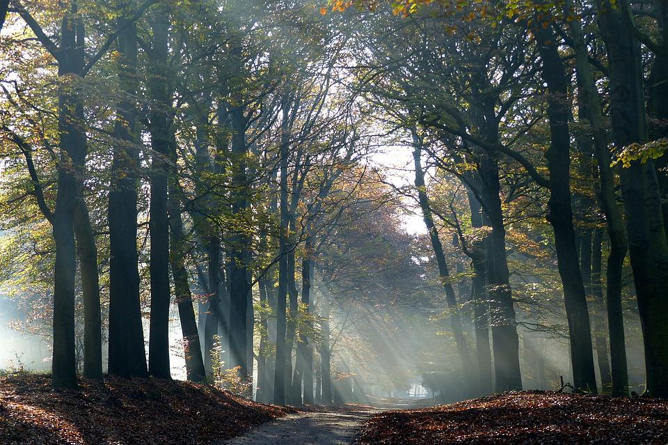 Autumn, Trees, Veluwe, Shelves Jerkin