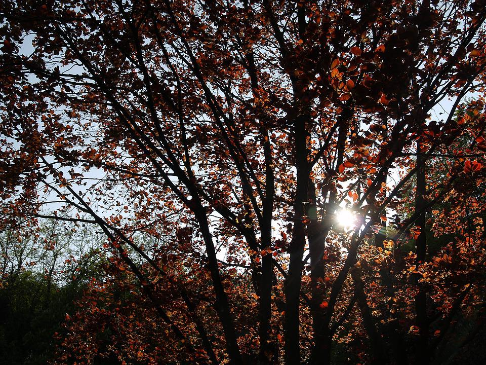 Autumn Woods, Nature, Trees