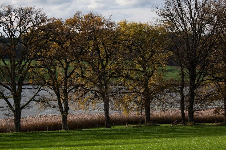 Avenue, Trees, Away, Sidewalk, Oak, Old Oaks, Idyll