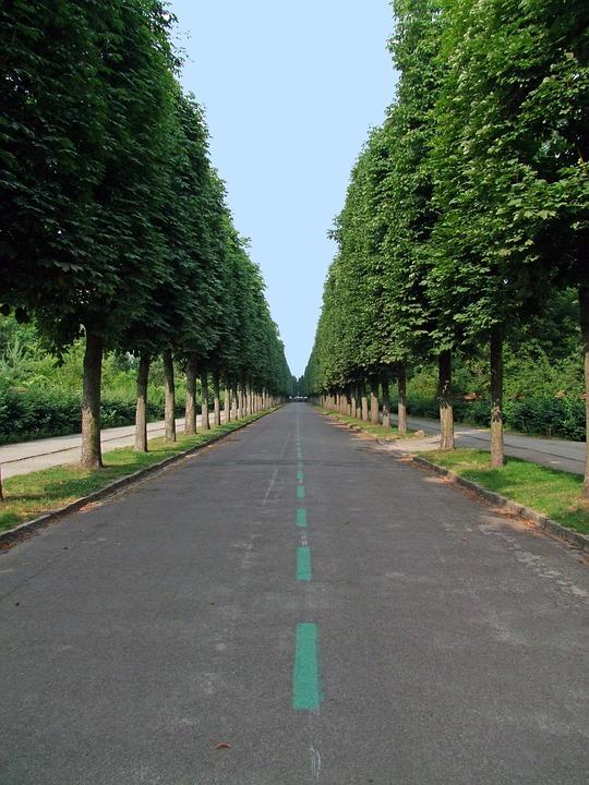Avenue, Tree Lined Avenue, Road, Trees, Park Sanssouci