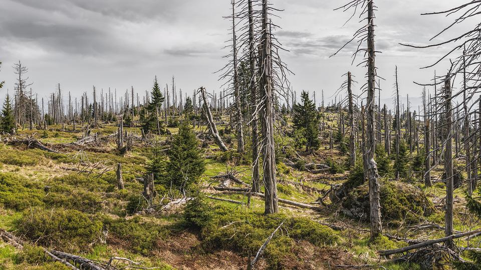 Bavarian Forest, Bavaria, Trees, Bark Beetles