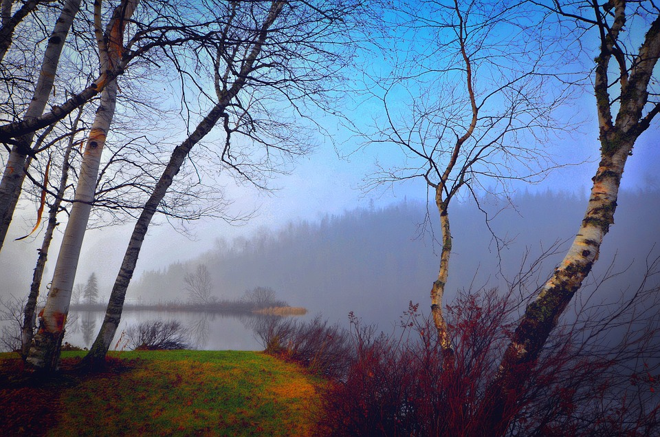 Mist, Landscape, Morning, Contrast, Trees, Fog, Birch