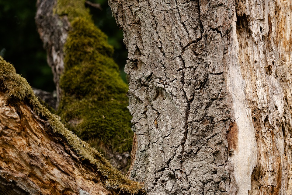 Forest, Moss, Branches, Branch, Bark, Wood, Trees