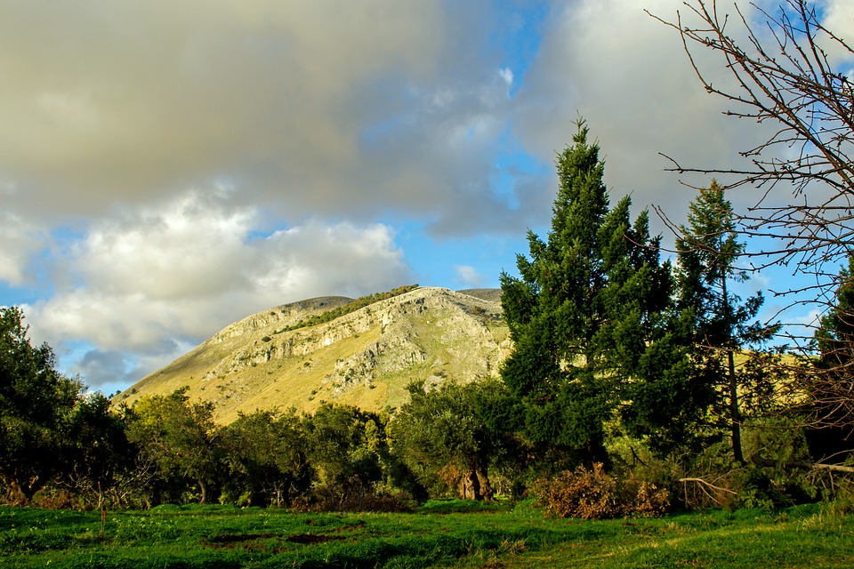 Olive Grove, Trees, Agriculture, Olive, Campaign
