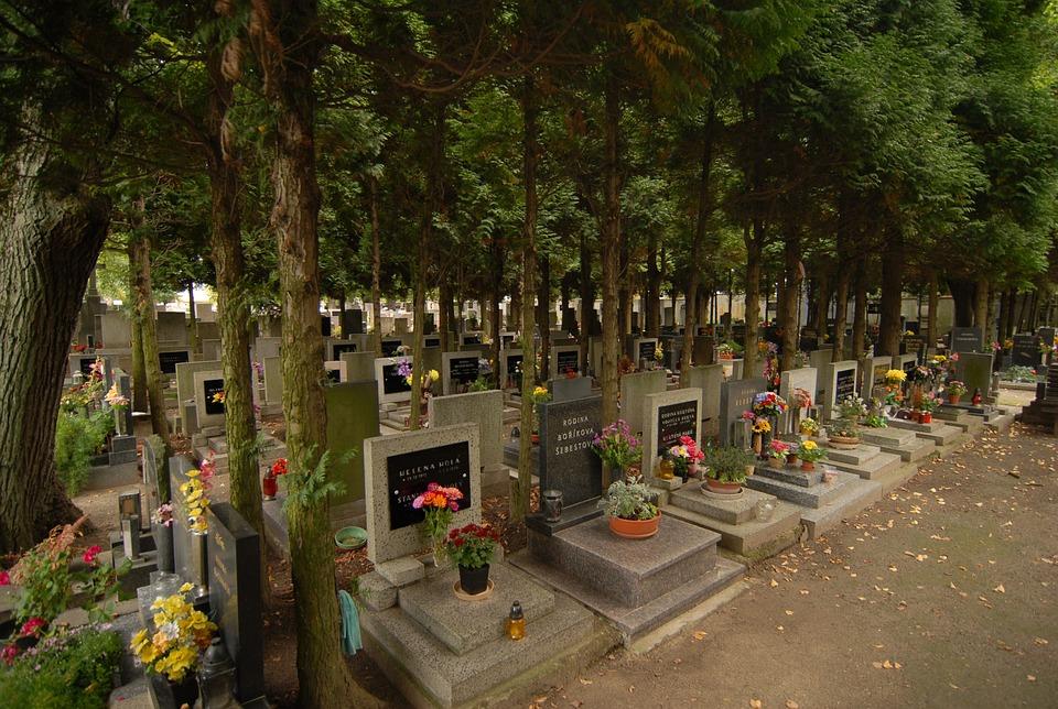 Trees, Cemetery, The Tombstones