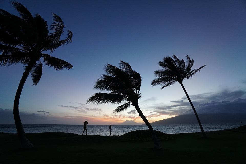 Nature, Landscape, Scenic, Blue, Sky, Trees, Coconut