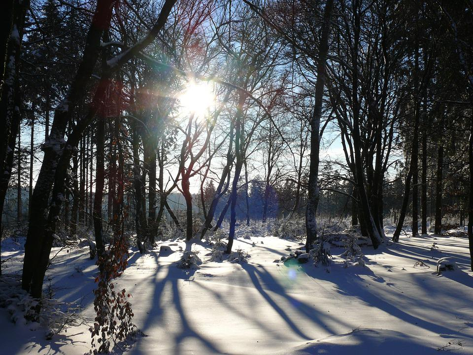 Snow, Winter, Forest, Trees, Cold
