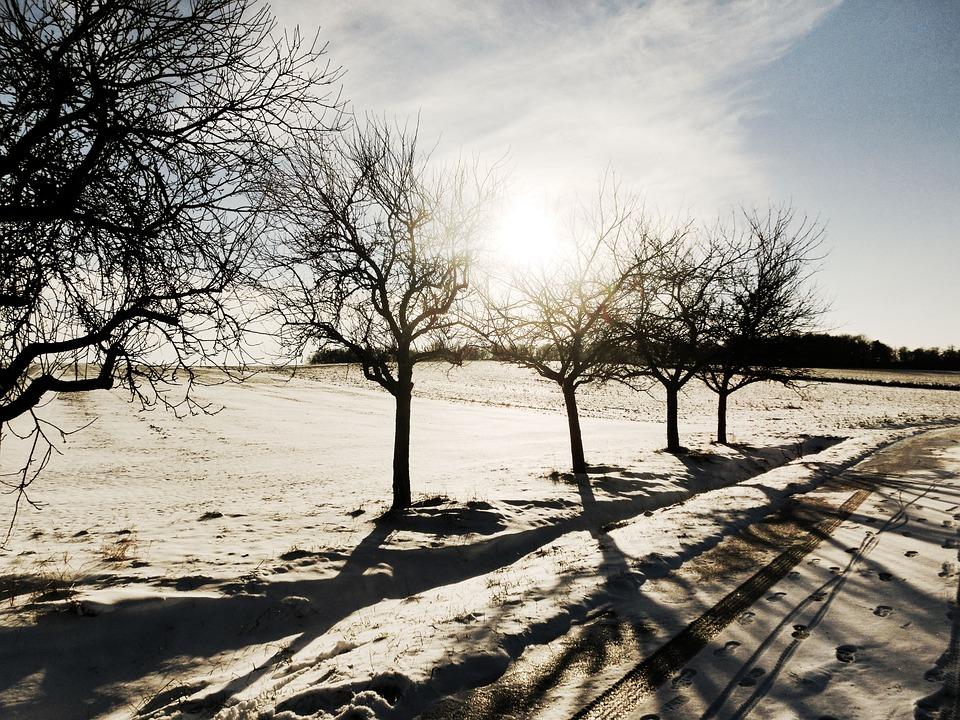 Winter, Landscape, Snow, Trees, Cold