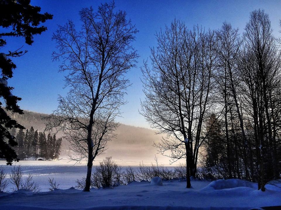 Winter Landscape, Trees, Winter, Nature, Contrast, Snow