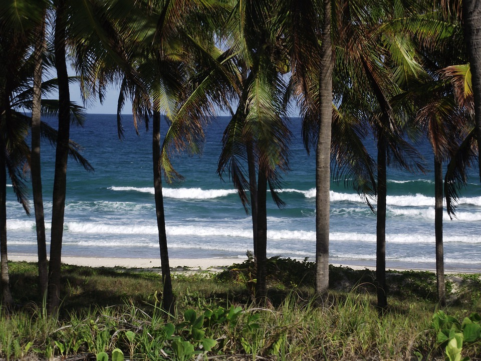Mar, Coconut Trees, Costa, Beach, Trees