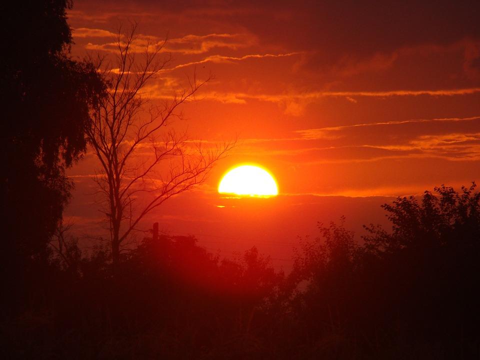 Red, Dark, Sunset, Evening, Sun, Trees, Branch