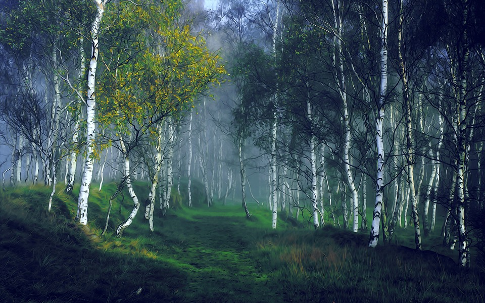 Birch, Forest, Nature, Landscape, Outdoor, Trees, Dawn