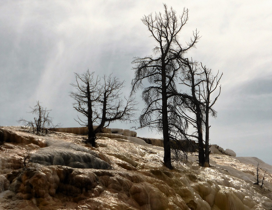 Trees, Death, Sulfur, Usa, National Park, Yellowstone
