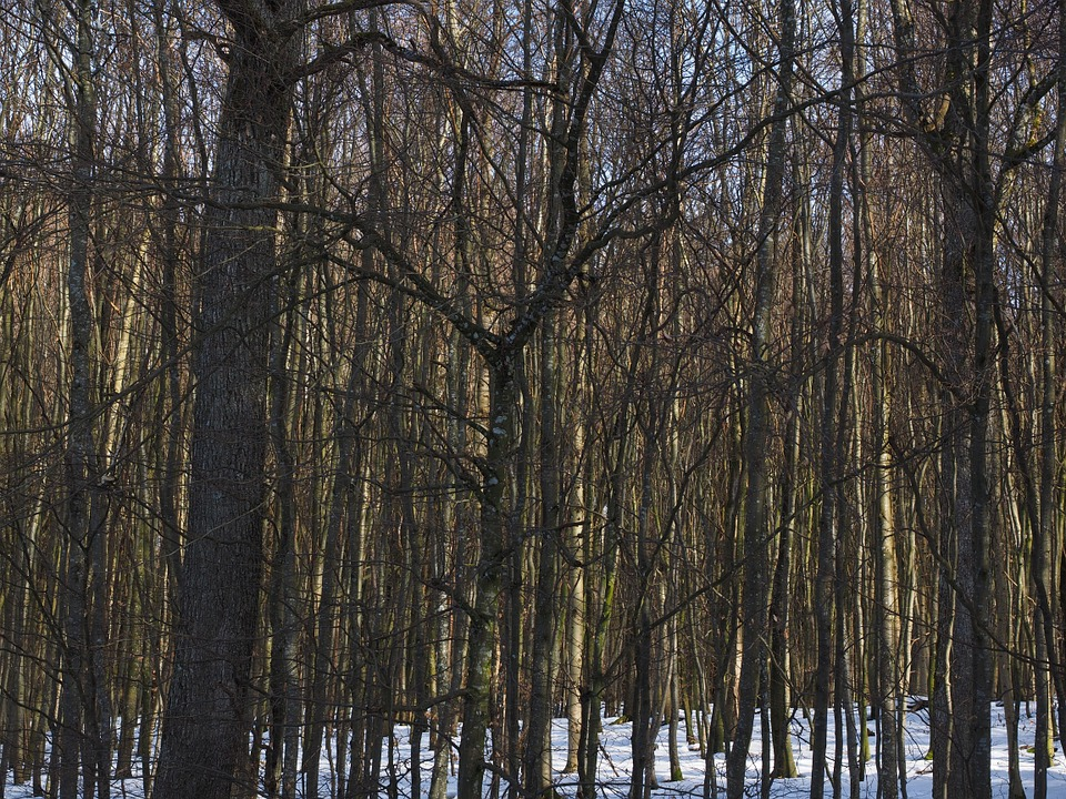 Forest, Trees, Deciduous Forest