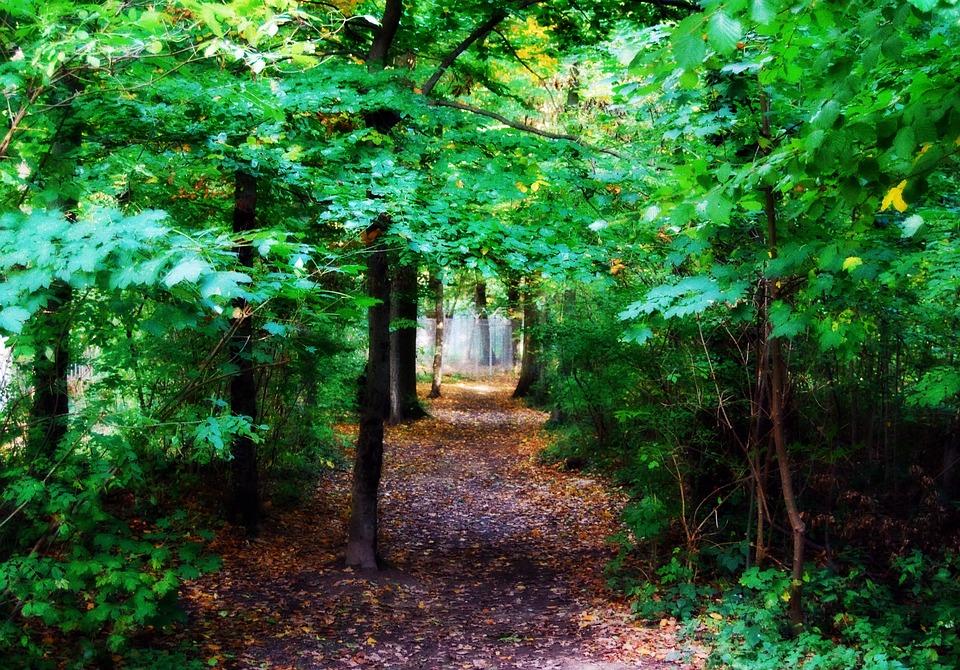 Fairy Tale Forest, Forest, Degerloch, Stuttgart, Trees