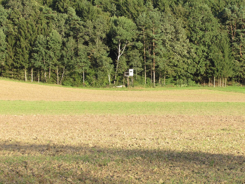 Trees, Edge Of The Woods, Nature, Fields, Arable