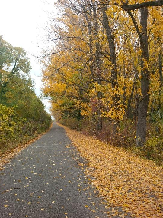Path, Trail, Footpath, Autumn, Fall, Trees, Leaves