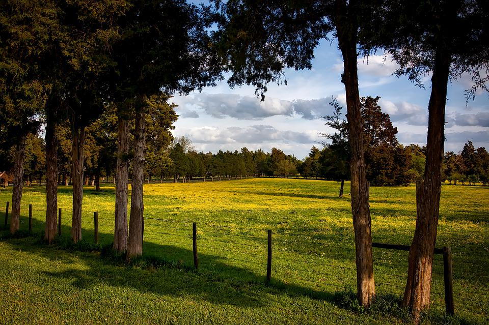 Alabama, Farm, Meadow, Field, Pastoral, Forest, Trees
