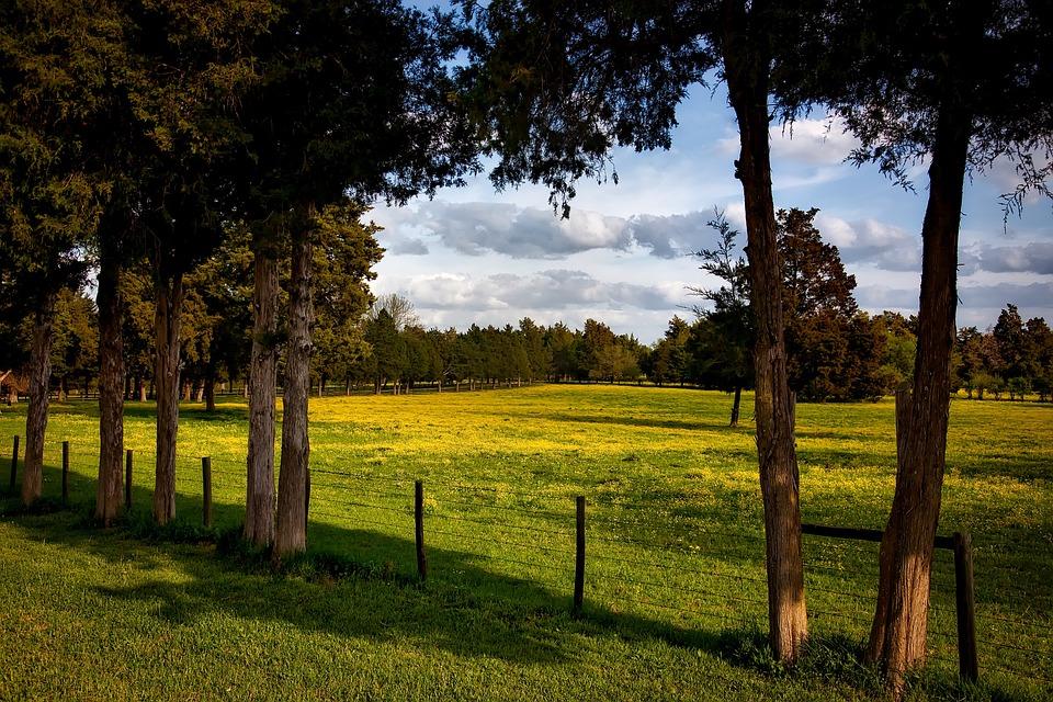 Alabama, Farm, Meadow, Field, Pastoral, Forest, Trees