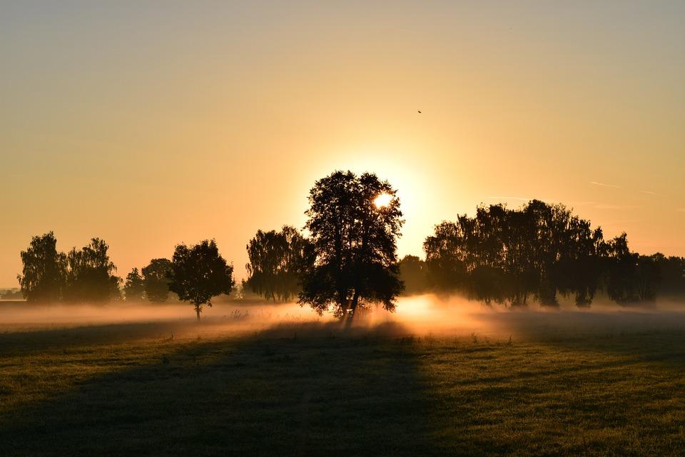 Field, Trees, Sunrise, Silhouettes, Tree Silhouettes