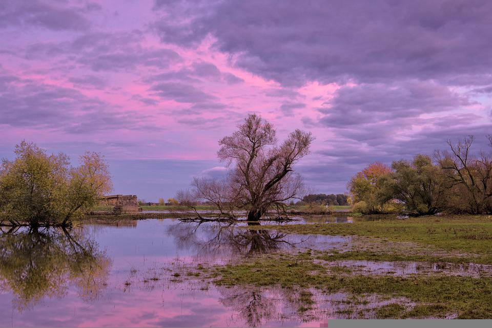 Sunset, Flood, Trees, High Water, Flooding, River