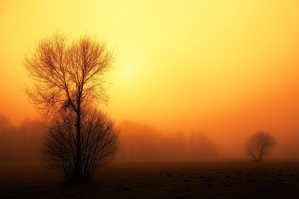 Sunset, Dawn, Nature, Sun, Fog, Foggy, Landscape, Trees