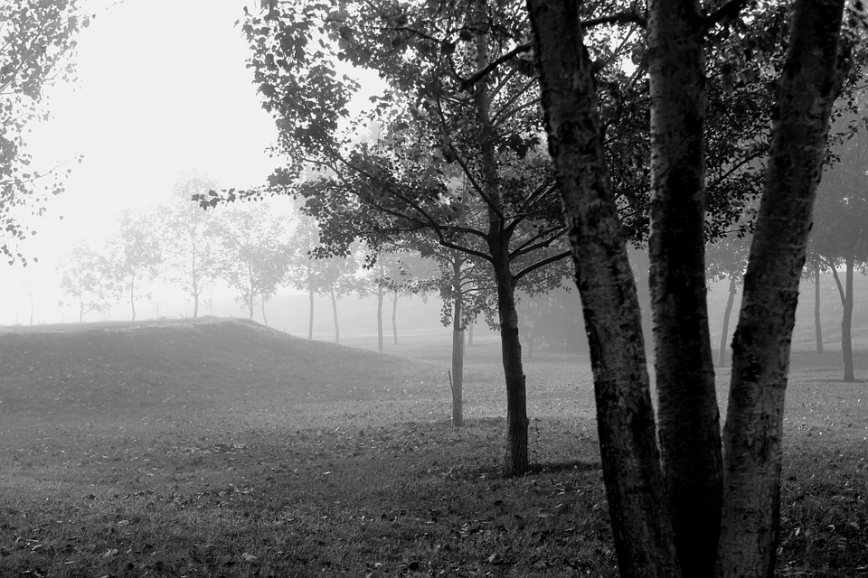 Trees, Foggy, Morning, Black And White, Misty