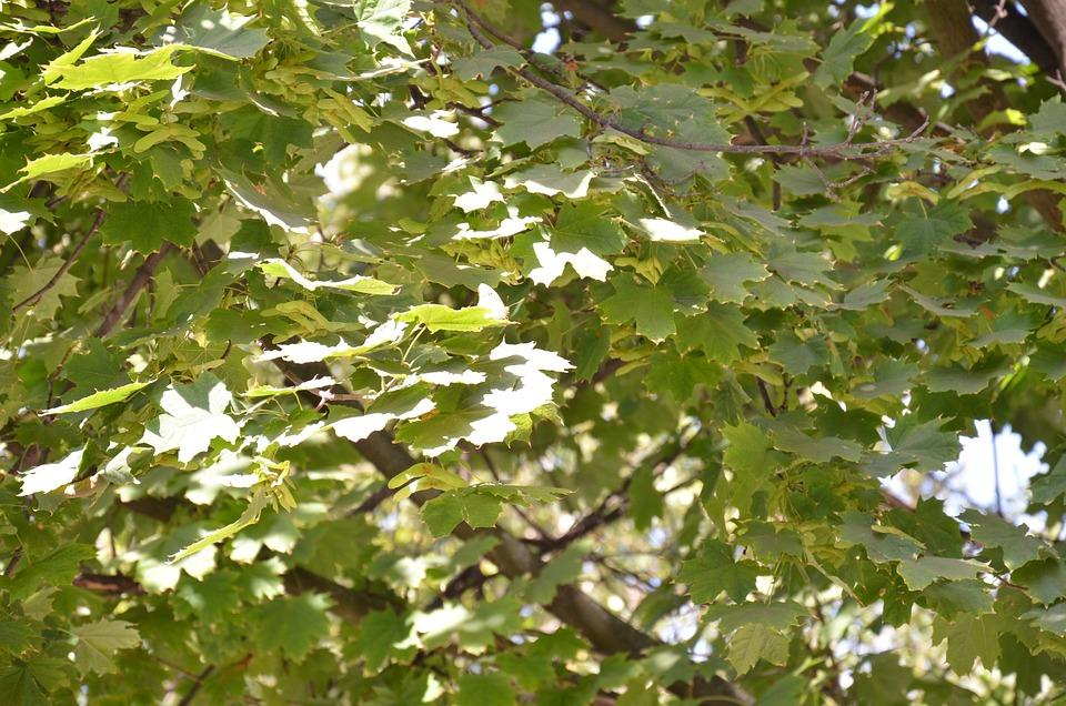 Foliage, Autumn, Trees