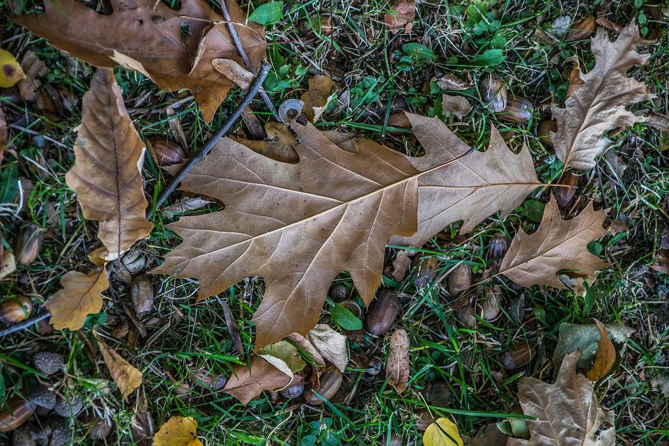 Autumn, Park, Foliage, Nature, Outdoor, Trees, Autumnal