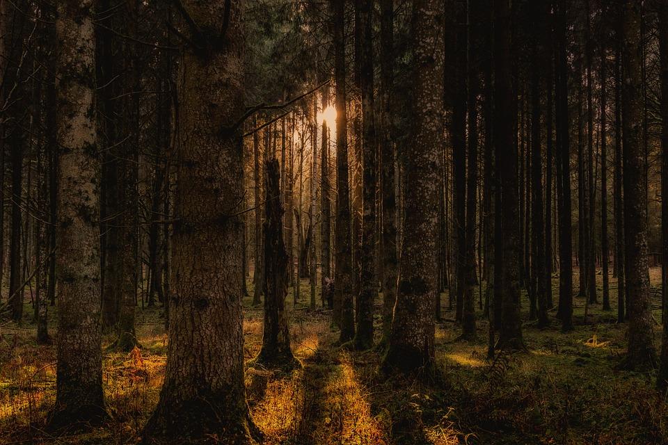 Forest, Trees, Landscape, Autumn, Wonderful, Green