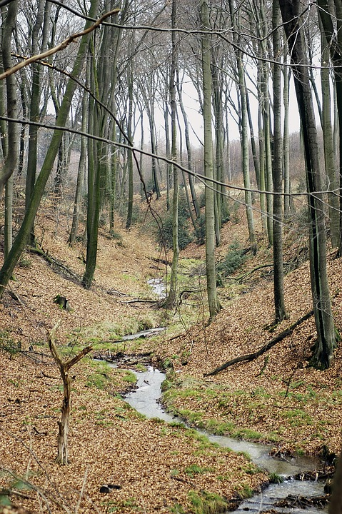 Forest, Bach, Nature, Trees