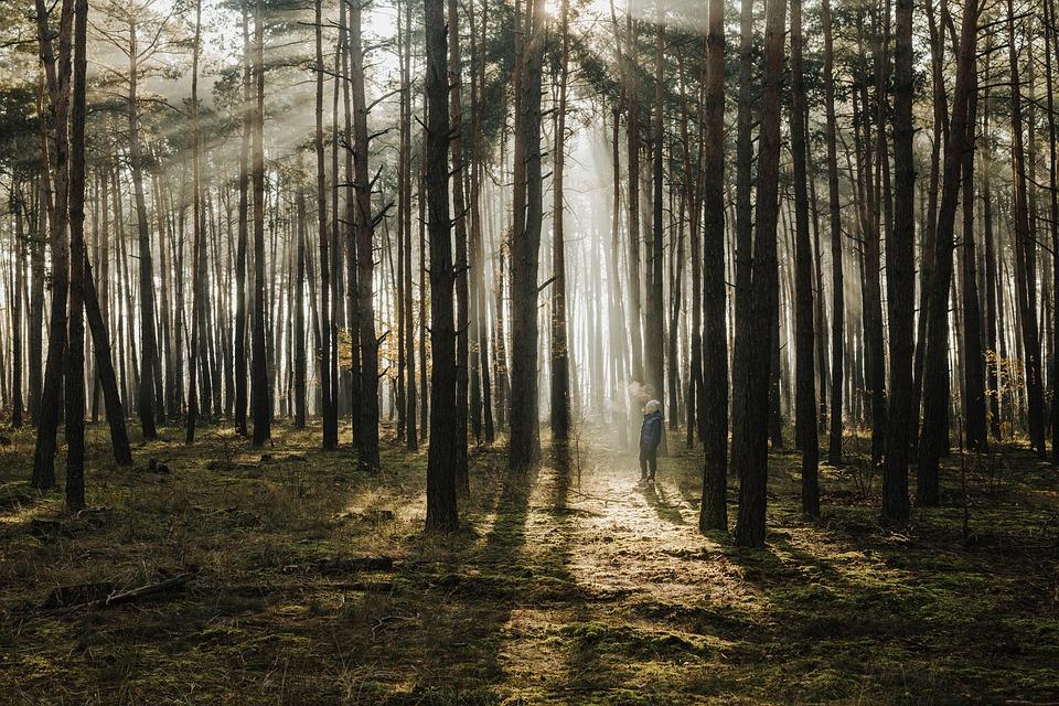 Trees, Forest, Sunlight, Sun Rays, Fog, Mist, Boy