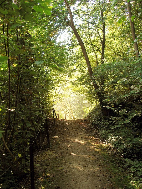 Forest Path, Romantic, Forest, Mood, Back Light, Trees