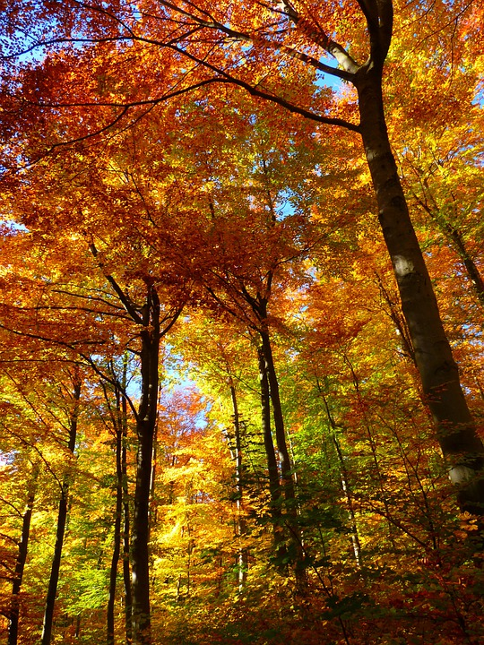 Forest, Autumn Forest, Colorful, Trees, Leaves, Autumn
